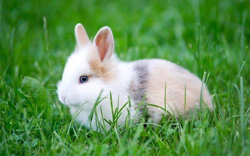 Kozmetik Ürünlerde Hayvan Testleri